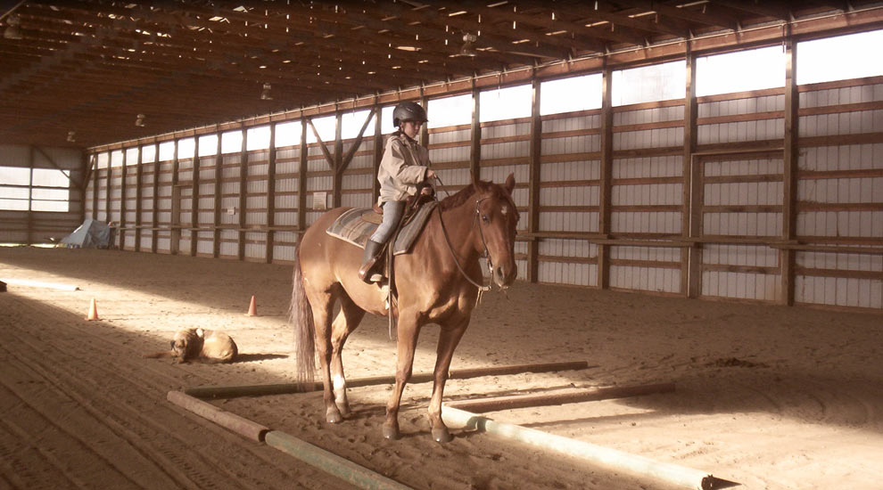 Horseback Lessons and Horse Boarding at North Star Stables, Comox